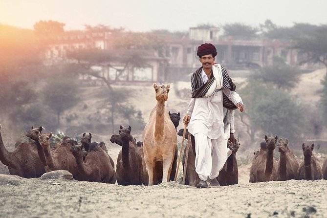This private day trip to Pushkar starts from Jodhpur and ends in Jaipur. Pushkar is one of the most popular destinations in Rajasthan and is known for having the world's only Lord Brahma Temple. The breathtaking views of the city and local environment will take you to a magical era. Enjoy your tour in an air-conditioned vehiclewith your driver and local guide.<br>1. Optional Tour To Pushkar<br>2. Option of adding Lunch