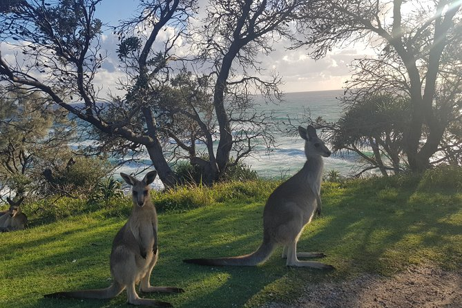 Full-Day Tour to North Stradbroke Island from Brisbane, Brisbane, AUSTRALIA