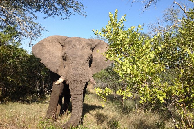 Safari three days and two nights to Kruger and Blyde Canyon