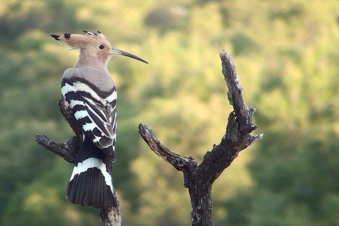 4-Ways Short Break Birding Tour in Catalonia, Tarragona, Spain