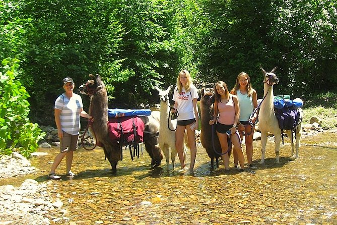 Hike for 3 hours with professional pack llamas on easy, wooded trails near Greeneville, Tn. Depending on the trail selection, we will walk in forest canopies, see mountain views, cross sparkling creeks and hike through pretty grassy fields.