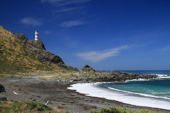 Full day Palliser Bay tour with Rose, Wellington, NUEVA ZELANDIA