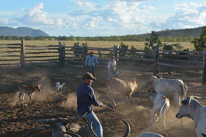 7-Day Guyana Wild Ranch Adventure from Lethem, Lethem, GUYANA