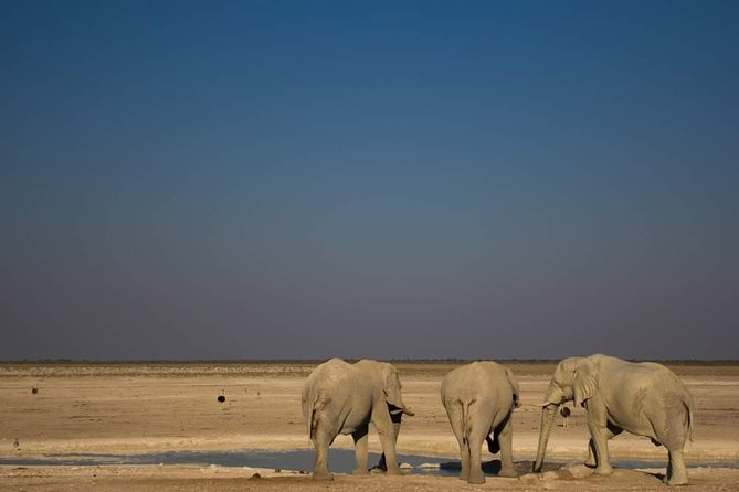 This African Wildlife Safari includes visiting one of Africa's premier game reserves, Etosha National Park. Including game drives, the chance to meet some local Namibian tribes, while staying in the comfort of accommodation with en-suite bathroom. This is a small-group tour caters for wildlife & nature lovers, and eco-friendly explorers. Explore Etosha National Park and search for species such as rhino, lion, cheetah, leopard, elephant, giraffe and numerous species of antelope as well as an impressive 340 species of birds.