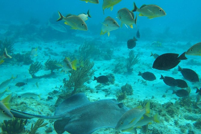 This tour goes to the Stingray City sandbar as well as two snorkeling stops, the Barrier Reef and the Coral Gardens, with a stop at the Kaibo Yacht Club for a beach lunch of fresh seafood with all the trimmings.