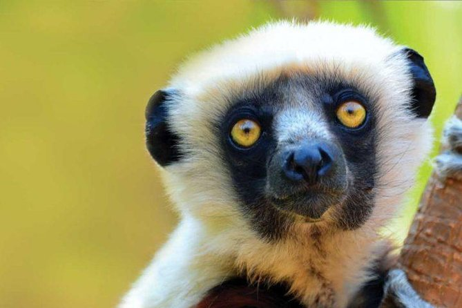 02 DAYS/ 01 NIGHT in ANDASIBE.<br><br>The nearest National Park from ANTANANARIVO the capital. <br><br>You will find many species of LEMURS, BIRDS and REPTILES and mostly the FAMOUS INDRI INDRI the endemic lemur in MADAGASCAR.