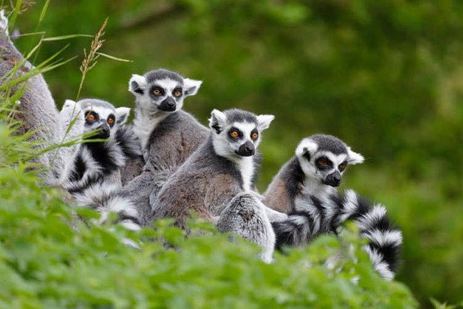 You will visit the city of Antananarivo and the Lemur Park to meet lemurs up close and personal - there are 9 species of them living freely in this Lemurs Park which is located 22 km from the center of Antananarivo in an area of this botanical park is of 4 to 6 hectares of 6000 planted trees.