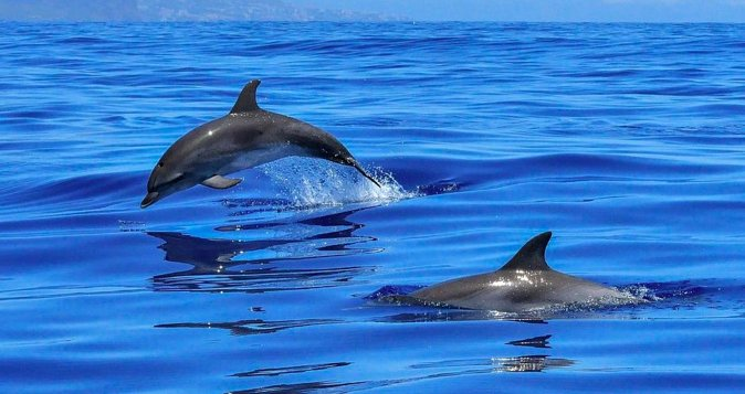 Roatan Shore Excursion:Small Group Tour With Dolphins, Snorkeling, By Land & Sea, Roatan, HONDURAS