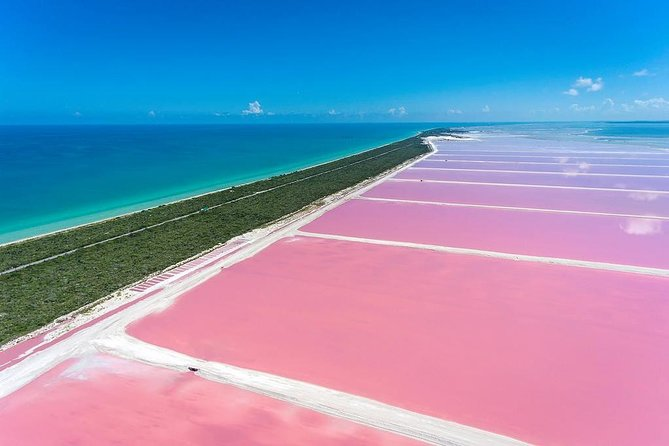 A colonial city that is very important in the historical life of Mexico. The pink waters of Las Coloradas. Pink flamingos in their natural sanctuary.