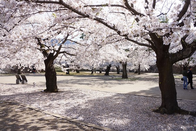 This tour takes you fromJR Nagano Station to the world-famous Jigokudani snow monkeysand to some of the most beloved cherry blossom viewing spots in Nagano. Seeing the blooming cherry blossoms (calledhanamiin Japanese)is one of the most Japanese things one can do whilst being in the land of the rising sun. Located in the cooler, mountainous region of northern Nagano, cherry blossoms tend to bloom later in this region than those in cities like Tokyo or Kyoto. Every year, the blossoms normally come intobloom from 2nd week of April. Nagano is not as famous as aforementioned cities but has many lovely places where you can see the brightly colored flowers. If you wish to get off the beaten track and see the wild monkeys & cherry blossoms on the same day, this tour is perfect for you.