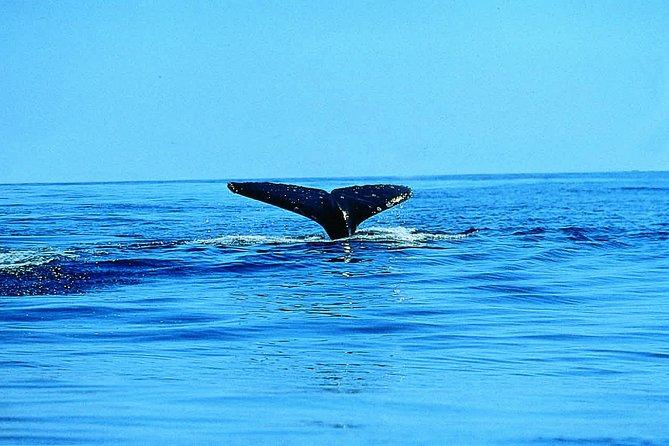 Whale Watching by Sea Kayak in Batemans Bay, Batemans Bay, AUSTRALIA
