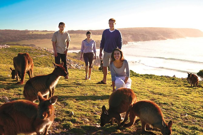 Combine wildlife and wine-tasting on a five-day tour of Adelaide and Kangaroo Island. Visit wineries in the Barossa Valley wine region, take a scenic drive through the Adelaide Hills, and meet sea lions and wallabies on Kangaroo Island. With plenty of free time to explore on your own, this five-day South Australian tour takes you to Flinders Chase National Park and includes accommodation in Adelaide and on Kangaroo Island.