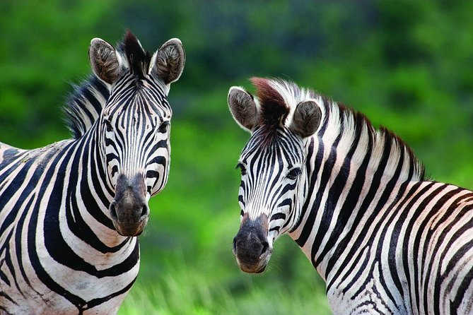 Experience a full day game drive into Hluhluwe Umfolozi Park and get up close to wildlife in their natural habitat and see the Big Five. Take a break for lunch and witness panoramic views of the park from the restaurant while receiving insights about the area from your knowledgeable local guide.