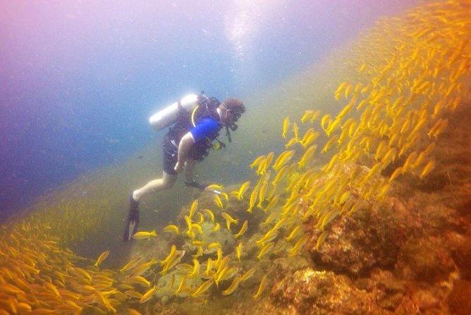 Medio día de submarinismo PADI de descubrimiento del submarinismo desde Koh Phi Phi, Ko Phi Phi Don, TAILANDIA