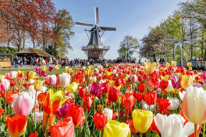 Escapada de un día a los jardines de Keukenhof y campos de flores desde Rotterdam, Rotterdam, HOLANDA