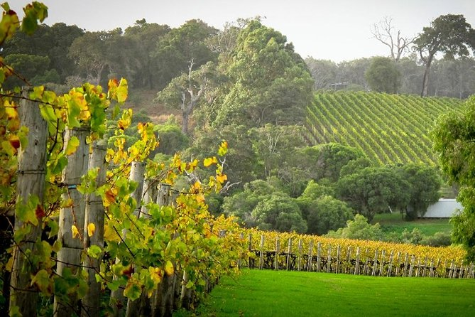 A scenic tour of the popular Swan Valley region packed full of amazing, authentic Australian experiences including local produce and wildlife encounters.