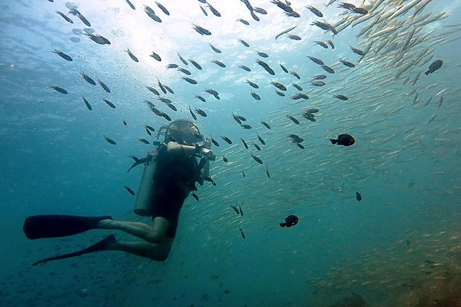 The dive trip around Koh Chang has 2 areas, we will dive one or the other. <br><br>1/ We dive the famous HTMS Chang wreck plus 2 coral sites, there is a choice to make 2 or 3 dives.<br><br>2/ We dive 2 coral sites in K rang national park. <br><br>Depending on weather, currents and request we decide on the planning <br><br>The trip included 2 dives for licensed divers, on some days it is possible to book a third dive on the day. <br>In case you would like to request a dive site, please send us a message so we can check if it can be organized.