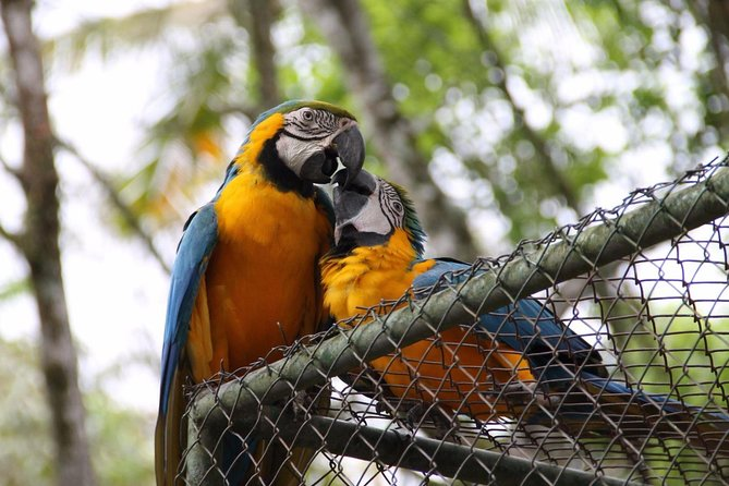 Brusque Zoobotanical Park occupies an area of 120,000 m², islocated in the middle of the native forest and has about 200 animals of approximately 60 species. For 25 years, it has given families, students and visitors in general moments of leisure and learning.