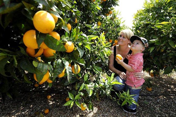 Half-Day Swan Valley Walk & Fruit Orchard, Perth, AUSTRALIA