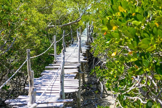 Visit Malindi and Watamu on this day tour to experience the hidden towns near Mombasa. Visit the Palace, shops, mosque and much more. Walk through the mangroves and see the Wildlife.