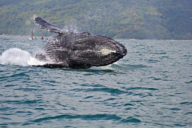 Whale Watching from San Jose, ,