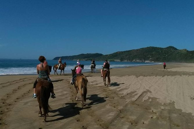 Enjoy a great morning horseback ride through coconut plantations, mangrove trees and on Playa Larga Beach which is the longest beach of the Ixtapa Zihuatanejo area. As you ride your horse on the beach there will be a nice ocean breeze and the results of: vegetation, ocean waves, lagoon and mountain range will make the horseback ride beautiful and pleasant.<br><br>The horses are friendly, well trained and very good for experienced riders and also for beginners, you will have the chance to go at your own pace and while riding on the beach you can even make the horse go at a faster pace.<br><br>You will ride on the horse for approximately 1 hour and 15 minutes, and will have the opportunity to take pictures with your own camera and the tour guide will also offer to take pictures of you with your camera.<br><br>At the end of the ride we will provide you with a good cold beer or a bottle of water.