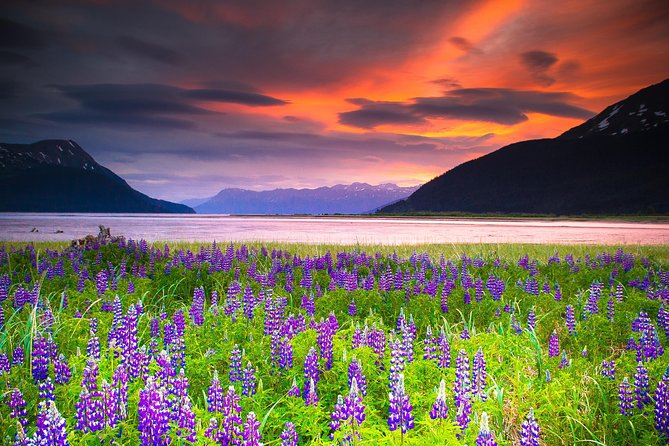 Spend 5hours on a half-day tour of the scenic Turnagain Arm—a narrow branch of the Cook Inlet that's backed by the Chugach Mountains. Drive on America's most scenic road, the famous Seward Highway, and stop atspots like Beluga Point to scan the landscape for wildlife. At the Alaska Wildlife Conservation Center, see where injured and orphaned animals are brought to be rehabilitated, andobserve large mammals like caribou, bison, and elk. Lunch is not included but available for purchase at the Alaska Wildlife Conservation Center. Later, drive through the Chugach Mountains, before finishing the guided, small group tour with a hotel drop-off in Anchorage.<br><br>Activity Level: EASY<br><br>Guests should be able to walk short distances on uneven ground. Trails surfaces vary from paved to uneven natural terrain. Tour participants must be able to walk a short distance and be able to get in/out of the tour vehicle with minimal assistance.