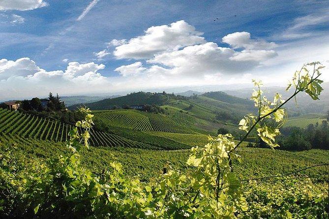 Degustação de vinhos e Visita às adegas reconhecidas como Patrimônio da Humanidade pela UNESCO, saindo de Turim, Langhe-Roero y Monferrato, Itália