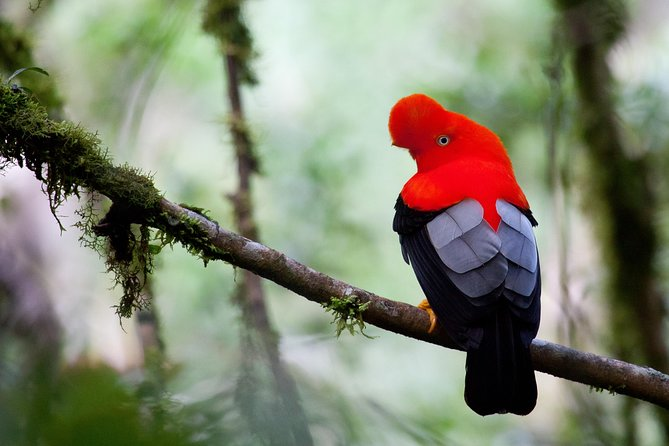 3 Day - Manu Cloud Forest - Group Service, Cusco, PERU