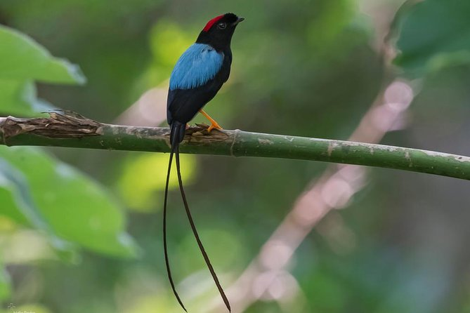 Birdwatching Day to Los Tarrales Nature Reserve (Private tour), Puerto Quetzal, GUATEMALA