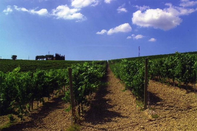 Wine Tasting Tour in the Umbrian Hills with Lunch, Assisi, ITALIA