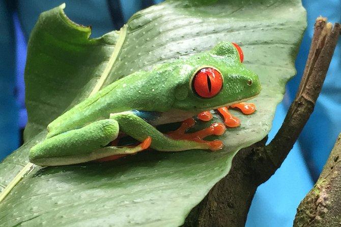 Flora Y Fauna Y Paseo A Caballo Por La Selva Tropical, ,