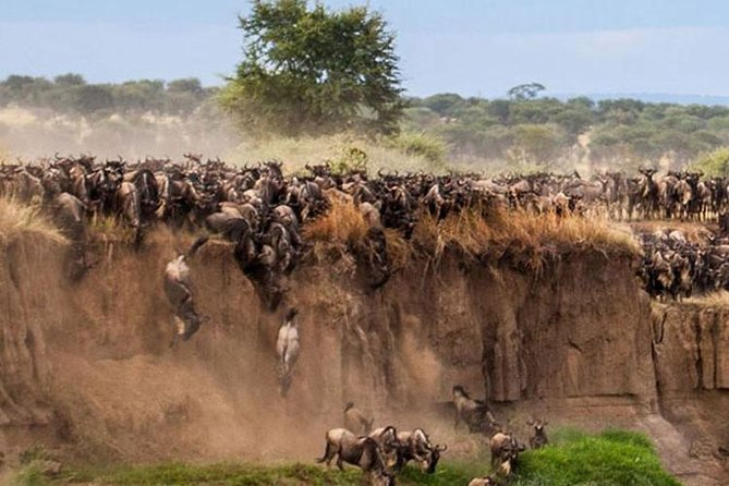 This forms one of the unmissable safaris in Kenya and lends you the chance to visit central wildlife and safari destination at an affordable price. The phenomenal wildbeeste migration which is a spectacular event only seen in Maasai mara is the the wonder of the world.<br>This is a budget safari whereby you will join other people in a customized safari vehicle and sleep in a tented tourist camp. The tents are all ensuite with a toilet, bathroom, bed, linen and mosquito nets. <br>