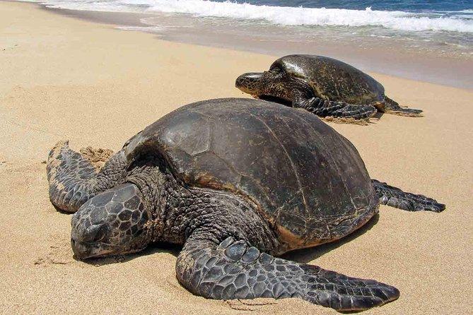 Sukamade Turtle Land Beach (2D1N), ,