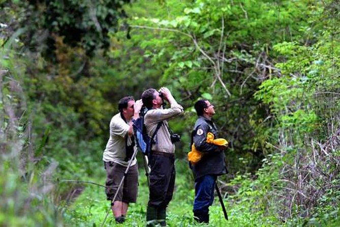 MÁS FOTOS, Birdwatching in Cerro Blanco from Guayaquil