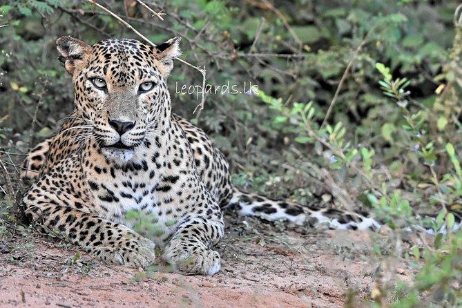 Full Day BIG 3 Safari Tour with Birding in Yala National Park by Expert Team, Parque Nacional Yala, SRI LANKA