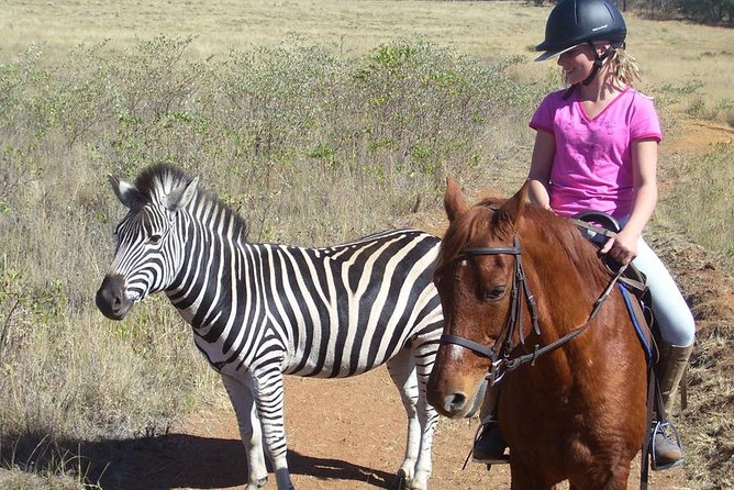 Horseback Africa is situated on a private Game Park. On safari you will experience vast open spaces and pure unspoiled nature. We only take small groups on Safari, which ensures that all our guests get an exclusive experience. On horseback, one can come unbelievably close to wild animals.<br><br>NB: TAKE NOTE OF WEIGHT LIMIT OF 95 kg