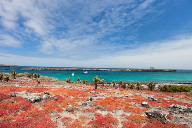 Take a full-day trip to the uninhabited South Plazas Island in Galapagos. Meet the colorful and unique GalapagosGiant Land Iguanas. Get close to a huge sea lions colony. Walk among theSesuviumground vegetation, which changes its colour from intense green in the rainy season to orange and purple in the dry season. Snorkel next to Galapagos exciting marine life. Box lunch is included as well as pick-up and drop-off from your hotel. A must visit during your Galapagos trip.