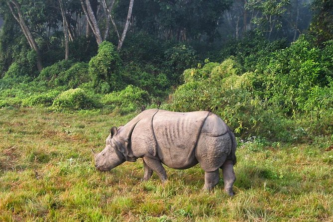 3 Nights Tour of Chitwan National Park is designed with full jungle adventure as it goes inside the Chitwan National Park tracing the wildlife. The tour goes into the last remaining pristine forests that once covered the Indian sub-continent located at the Terai plains of Nepal. The forest is protected by Chitwan National Park covering 932 sq. Km (UNESCO World Heritage Site). The tour also takes you to the Tharu villages and also shows you the Tharu cultural show, canoe ride, lovely sunset view etc. This package is suitable for any age group.