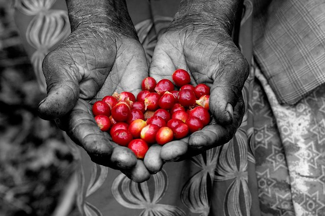 Take a step back in time to learn and taste coffee picked, washed, roasted and ground by your own hand.