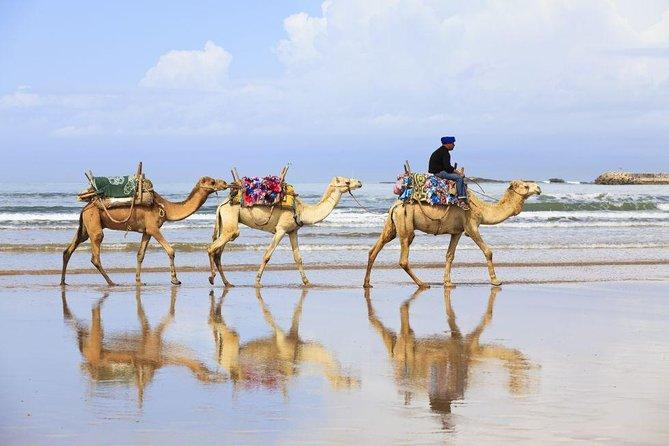 VIP Tangier Private Tour, Tangier, Morocco