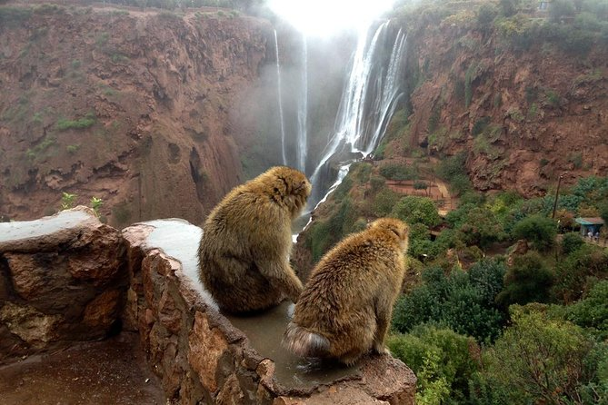 Discover the most fascinating waterfalls in morocco.<br>Enjoy a break taking landscapes while driving to Ouzoud waterfalls<br>Take a walk on foot to discover the charm of this wonderful place.<br>Enjoy the delicious traditional meal on the terrace of a local restaurant in front of the waterfalls.<br>Enjoy a hike with a local guide and meet the wild Barbary macaque (monkeys).<br>Discover the Berber lifestyle while visiting a Berber family.<br>Take memorable photos of the landscapes in ouzoud waterfalls<br>Itinerary:<br><br>After breakfast, your driver will meet you at your accommodation in Marrakech to take you in a trip to the Ouzoud waterfalls from Marrakech and enjoy a sweet day at the foot of one of the most beautiful waterfalls in North Africa.<br><br>The waterfalls of Ouzoud, located 170 km north of Marrakech in the heart of the Middle Atlas in the most coveted mountain range of Morocco.<br><br>On our way will cross many Berber villages settled in the foothills of the atlas and the fields of Almand and olives.