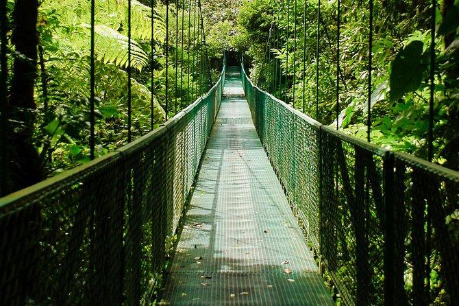 Escapada de un día al bosque nuboso Monteverde, Playa Flamingo, COSTA RICA