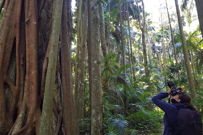 Small group Gold Coast Mountain Tour: Springbrook National Park and Mt Tamborine, Gold Coast, AUSTRALIA