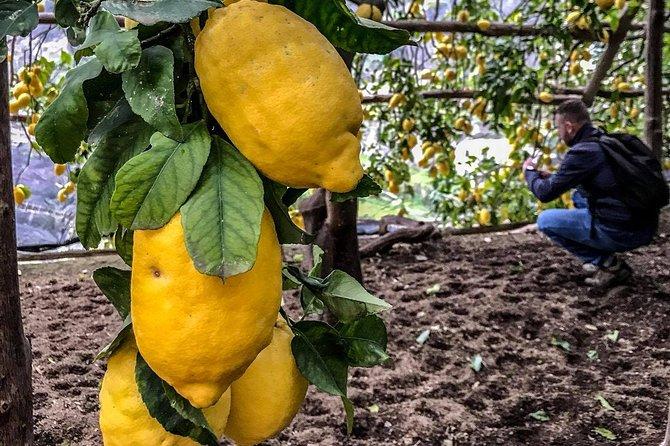 Private Tour: The Path of the Lemons, Pompeya, ITALIA