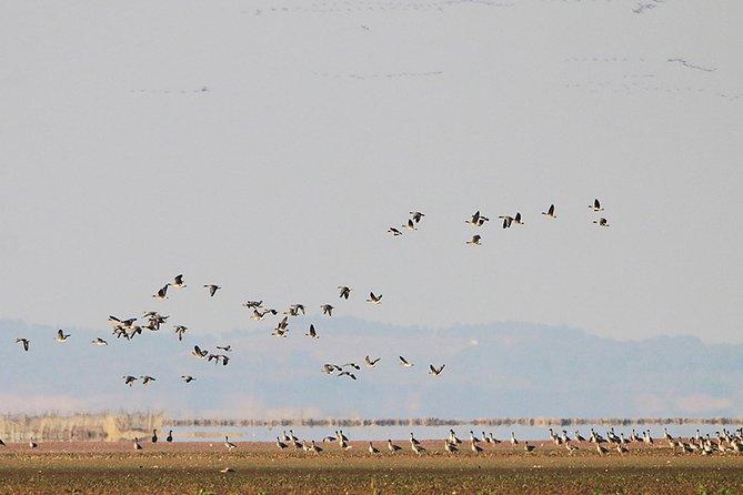 Bird Watching Tour at Wucheng Poyang Lake Nature Reserve From Nanchang, Nanchang, CHINA