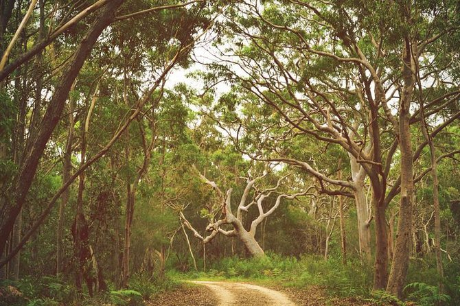 Strap on your walking shoes and saddle up as you begin your Australian adventure to the Royal National Park (RNP). You'll join one of our local Sydney hosts on a train ride from Sydney's Town Hall to Cronulla. You'll then catch a ferry to Bundeena where you'll be surrounded by pristine waters, rugged cliffs and endless coastal views. Enjoy a picnic on Garie Beach, have a surf and soak up the sun while you do some whale-spotting!<br><br>Within 24 hours after booking you'll receive a short questionnaire about your personality and interests. Based on your responses, you'll be assigned a like-minded host. Your host will communicate with you directly to suggest an itinerary to help you discover what makes the city unique. You will also agree on a meeting time and place. Your itinerary is flexible, so during the experience, you can always change your mind about what you want to do.<br>