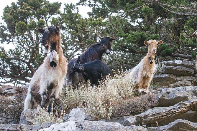 Semi Private Jeep Safari Tour - Visit a Shepherd's Hut, ,