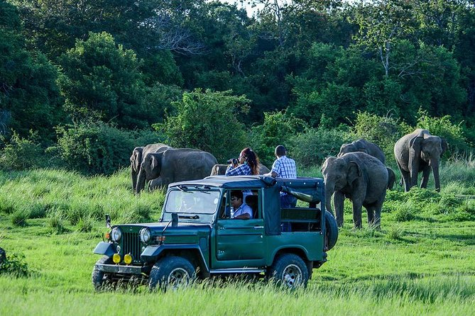 Udawalawe Safari Day Trip is organized by Bentota Travel Mart ( BTM ) for the tourists who stay at Bentota , Induruwa , Kosgoda , Ahungalla, Balapitiya, Ambalangoda, Aluthgama , Beruwala , Kalutara & Wadduwa areas.<br><br>If anyone is looking to explore wild safari with witnessing large group of Elephants & various kind of animals, then Udawalawe National Park is the most identical place for that. This is one of the popular day excursions for the traveler in Sri Lanka. <br><br>Attractions & Activities<br>• Udawalawe Natinal Park Jeep Safari<br>• Udawalawe Elephant Transit Home ( Elephant Orphanage )<br>• Moonstone Gem Mining Centre ( Optional )<br>• Herbal Harden ( Optional )<br><br>Key Points<br>• Tour Starts pick-up point at 5.00 am from the for Morning Safari & at 8.30am for Evening Safari<br>• Pick up from anywhere in Bentota, Induruwa, Kosgoda , Ahungalla,Balapitiya, Ambalangoda, Aluthgama , Beruwala , Kalutara and Wadduwa. <br>• Drop off at the pick-up point or any place in between Udawalawe and the pick-up point <br><br>.