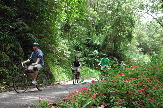 MÁS FOTOS, Original Blue Mountain Bicycle Tour from Falmouth